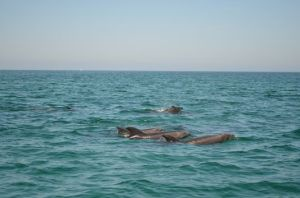 a-dolphin-family-swimming-next-to-us-on-the-way-back-to-La-Paz